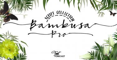 Bambusa Pro [4 Fonts]