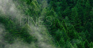 Pines Thin & Pines Thin Italic [2 Fonts]